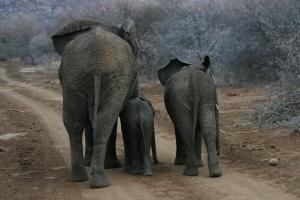 Trio of Elephants