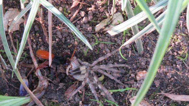 Spider Wasp 1, Spider 0
