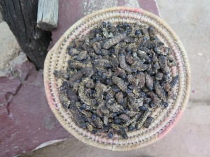 Apparently Mopane worms are both popular and nutritious.