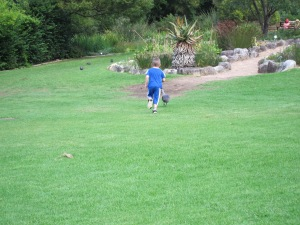 Pickle fruitlessly chasing a Hadeda.