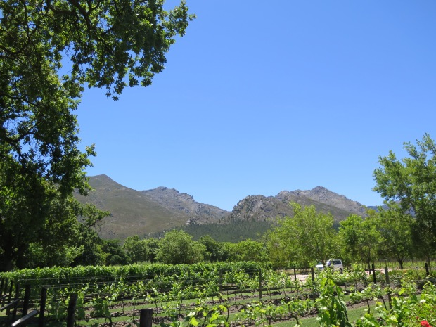 Vineyard Franschhoek Rows of Vines, Mountains and Blue Sky