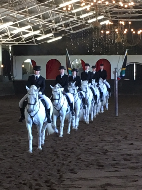The South African Lipizzaners trotting in formation, Johannesburg.