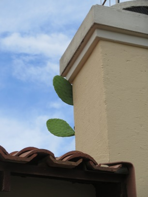 When expat life is like a cactus on the roof.