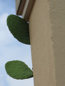 Expat cactus on the roof close up.