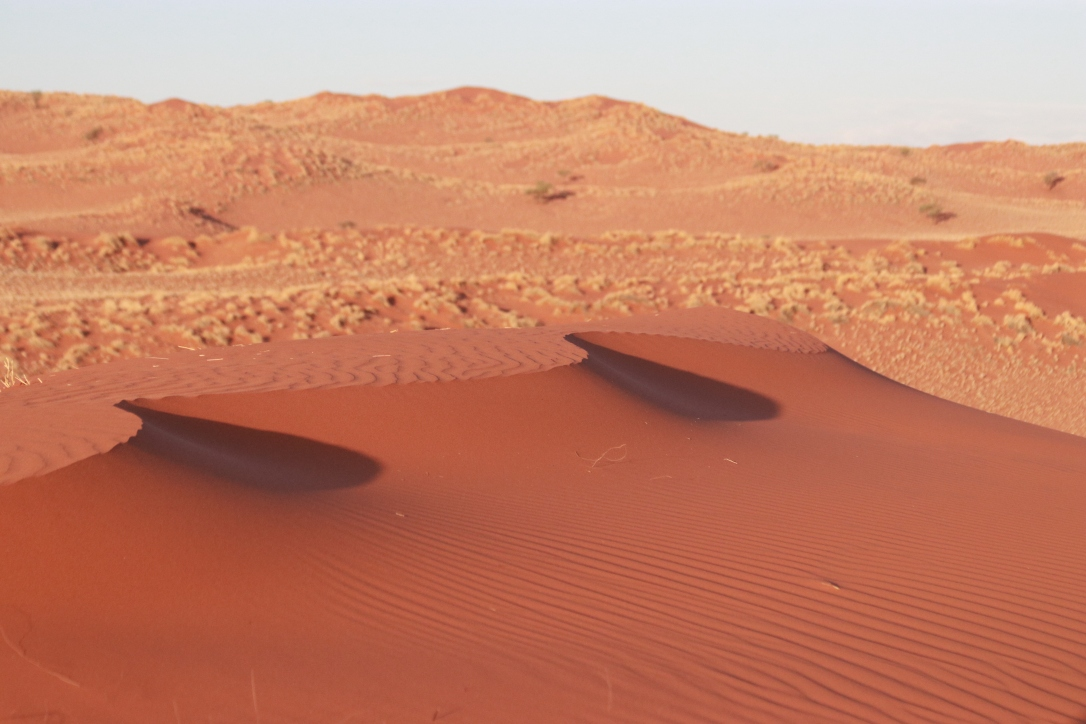 Gorgeous red wind sculpted sand dunes, Namibian desert.