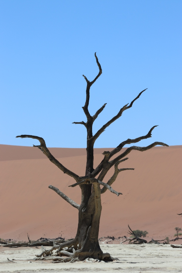 Petrified tree at Dead Vlei in Sossusvlei Namibia on family holiday.